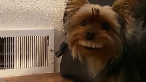 Pas sa protezom za zube - Sputnik Srbija