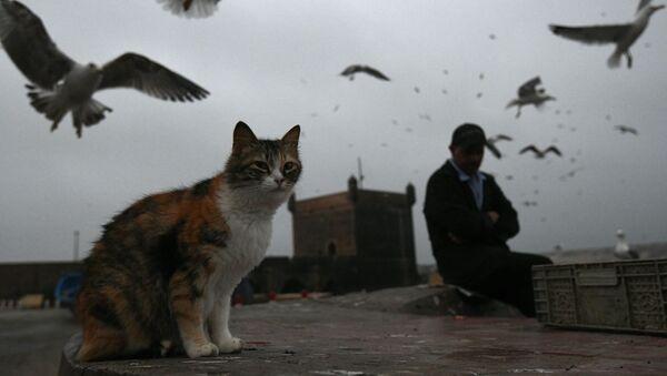 Mačka i ptice - Sputnik Srbija