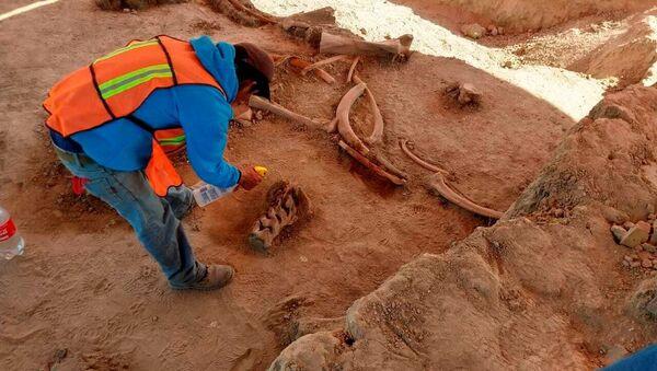 Kosti mamuta pronađene u Meksiku - Sputnik Srbija