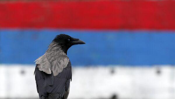 Ptica stoji ispred srpske zastave - Sputnik Srbija