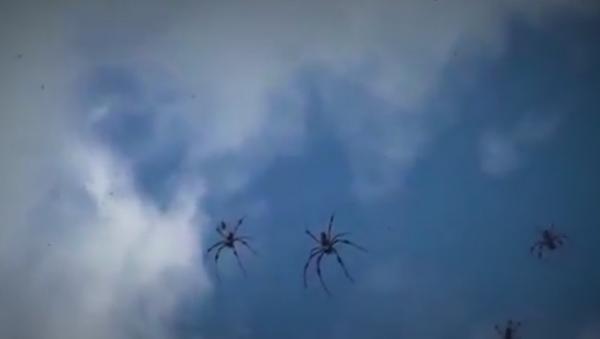 Киша паукова, Аустралија - Sputnik Србија