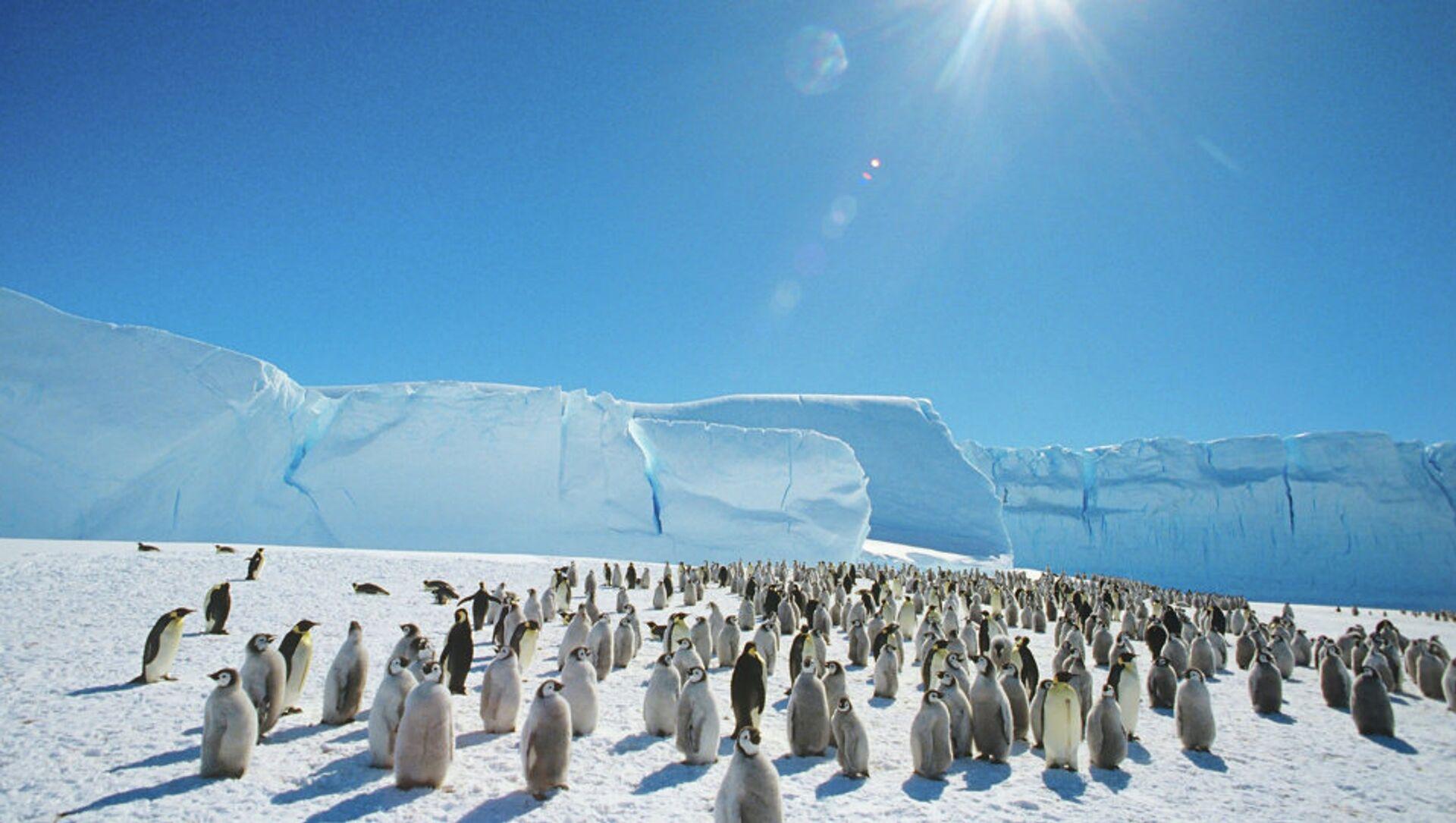Carski pingvini u blizini sovjetske istraživačke stanice na Antarktiku - Sputnik Srbija, 1920, 15.02.2021
