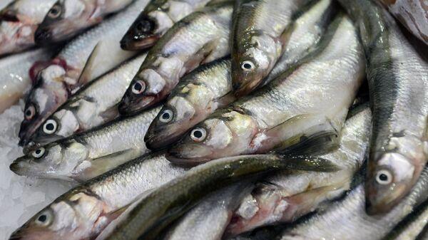 Све врсте риба садрже драгоцене витамине. - Sputnik Србија