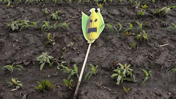 GMO - Sputnik Srbija
