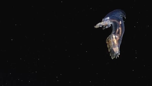 Unknown Alien-Like Creatures Caught on Camera in the Atlantic - Sputnik Srbija