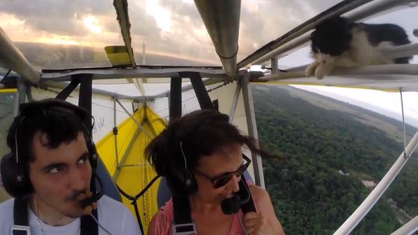 Час летења Лет са мачком - Sputnik Србија