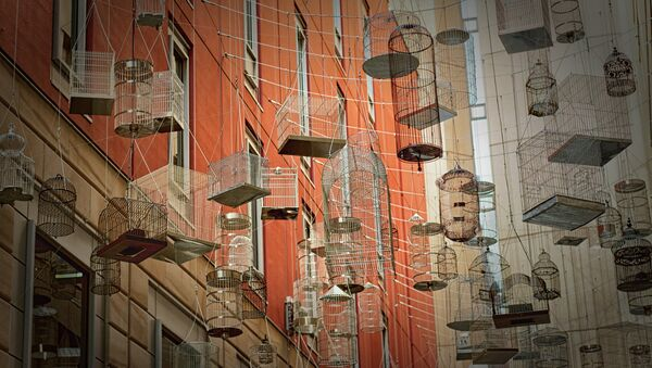 Kavezi za ptice - Sputnik Srbija