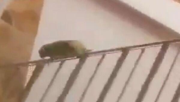 Pretty sure this bird is mental - Sputnik Srbija