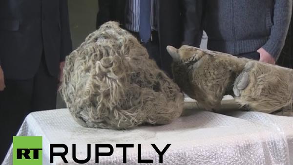 Ostaci bebe vunastog nosoroga - Sputnik Srbija