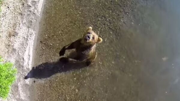 Медвед у риболову - Sputnik Србија