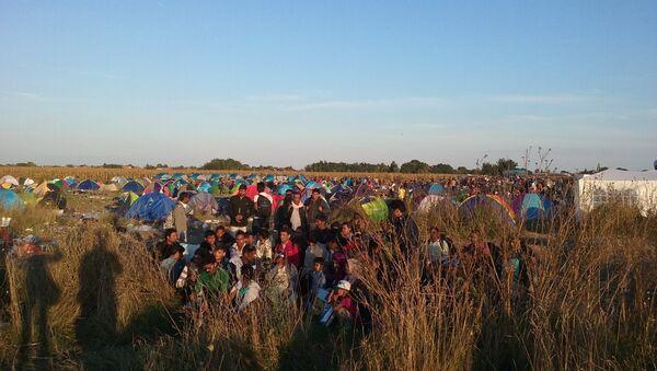 Migranti nadomak granice sa Mađarskom - Sputnik Srbija