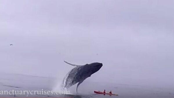 Грбави кит, Калифорнија - Sputnik Србија
