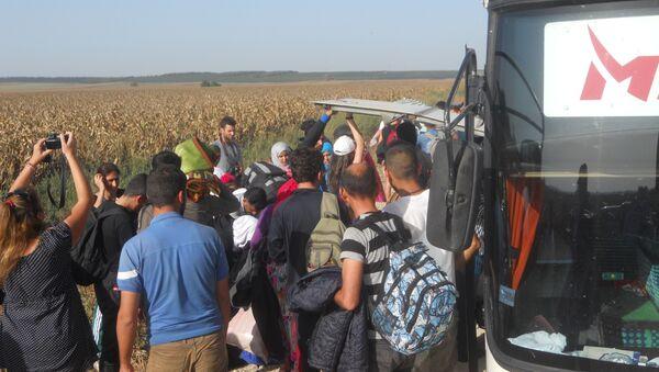 Izbeglice, granica Srbije i Hrvatske kod Šida i Tovarnika - Sputnik Srbija