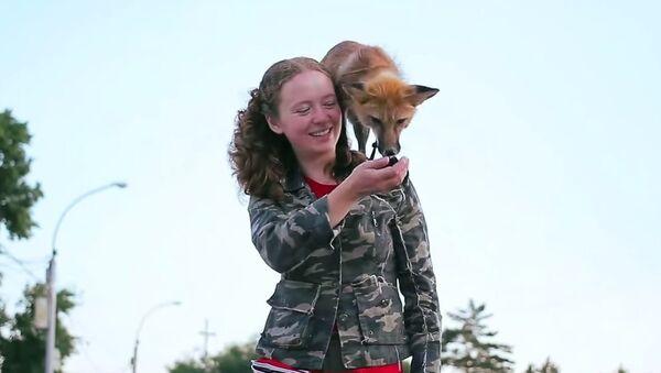 Fox in Novosibirsk - Sputnik Srbija